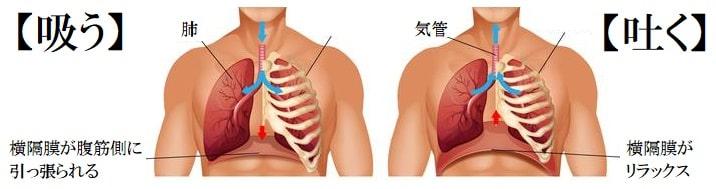 横隔膜を使って呼吸